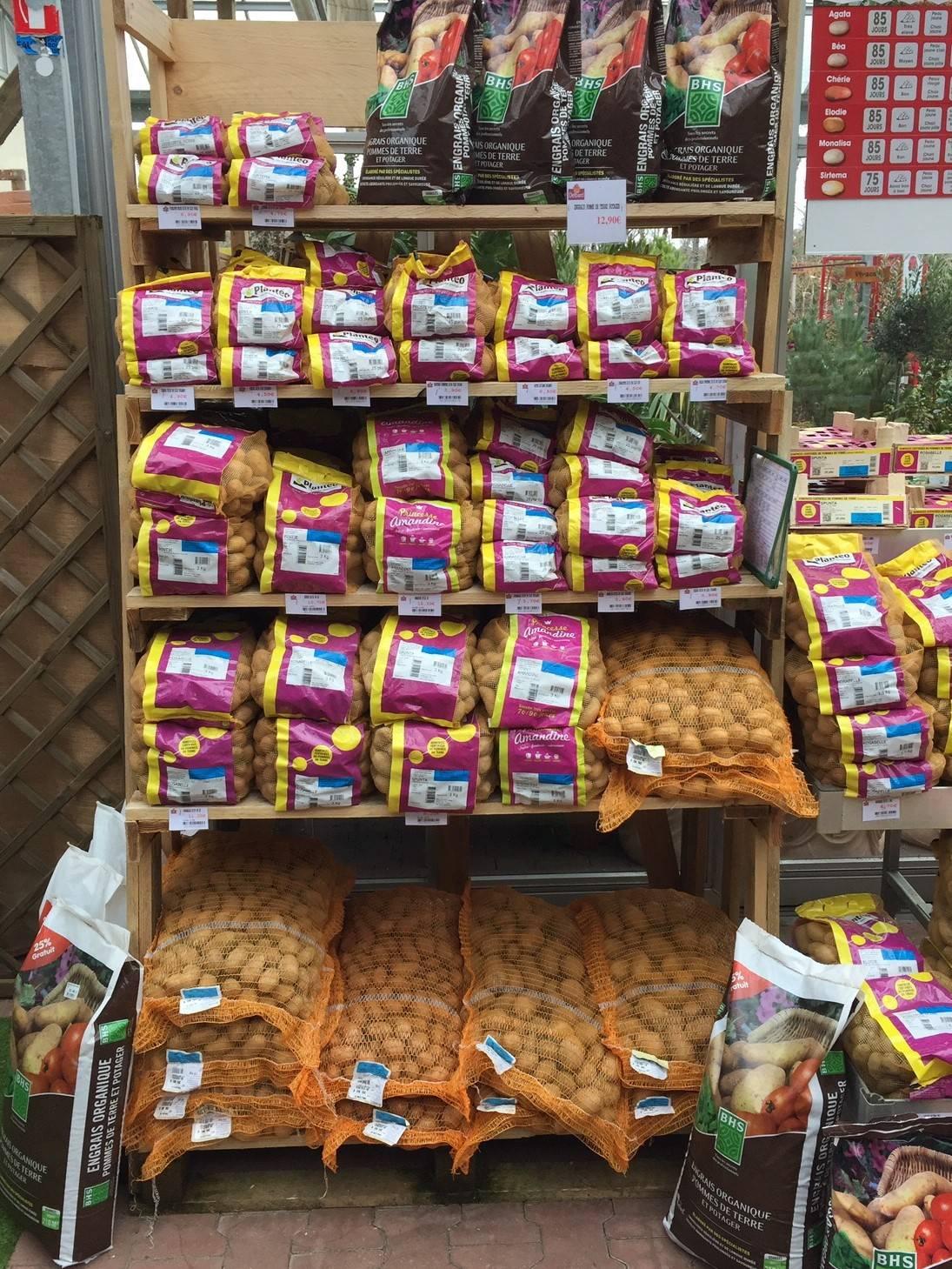 vente plants de pommes de terre lacanau l ge cap ferret. Black Bedroom Furniture Sets. Home Design Ideas